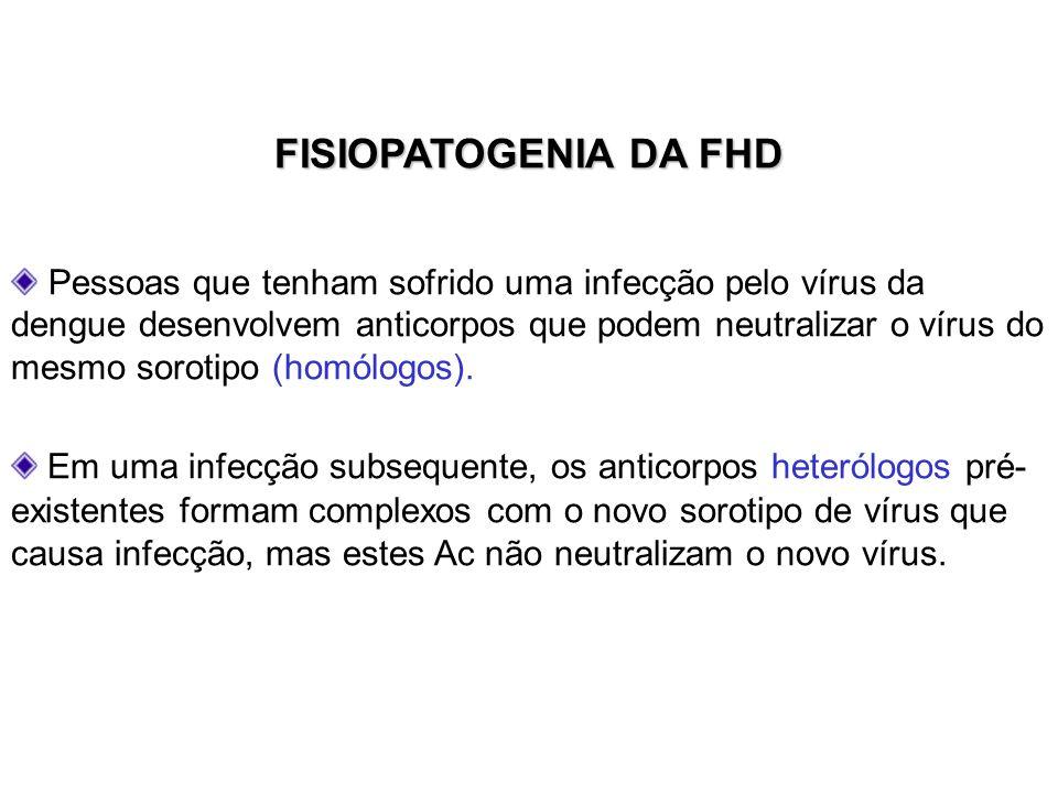 FISIOPATOGENIA DA FHD Pessoas que tenham sofrido uma infecção pelo vírus da dengue desenvolvem anticorpos que podem neutralizar o vírus do mesmo sorot