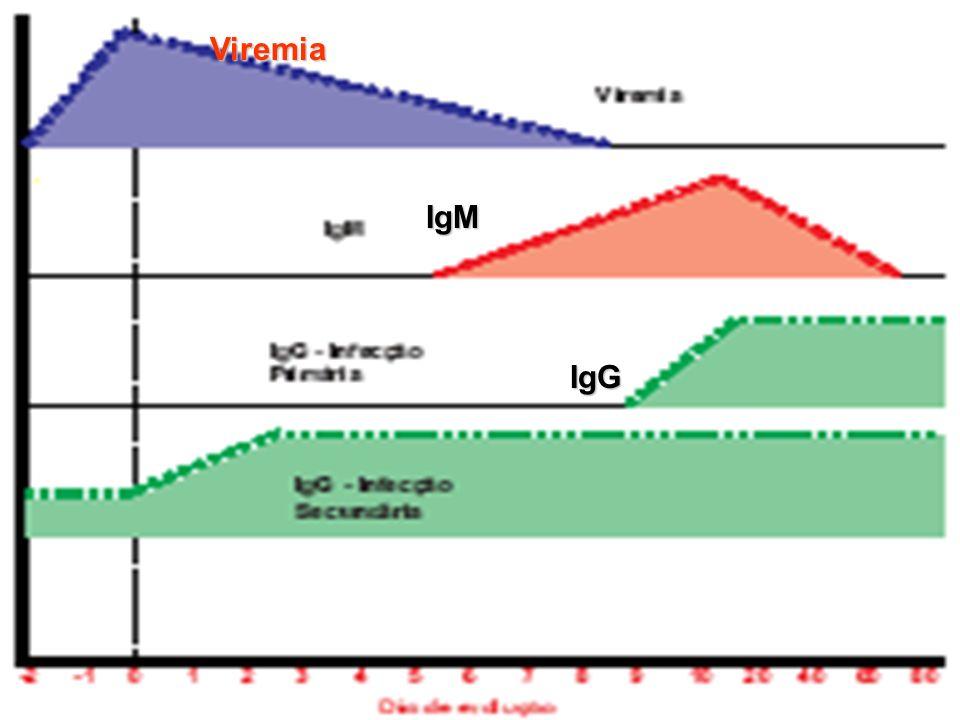 Viremia IgM IgG