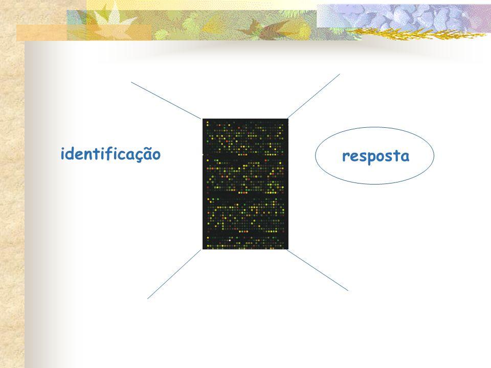 identificação resposta