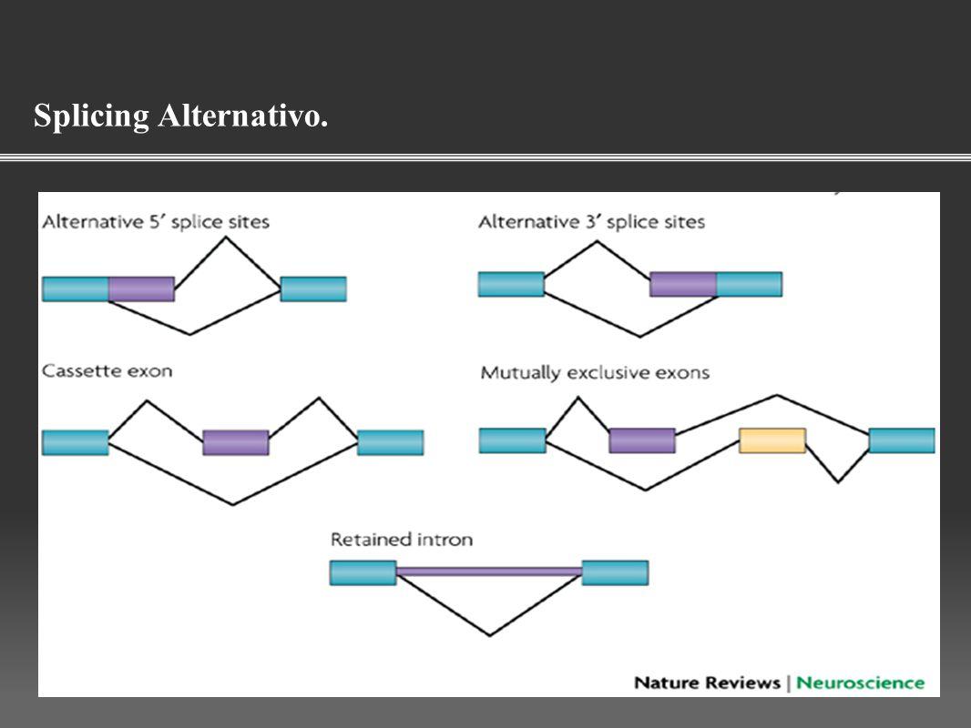 Splicing Alternativo.