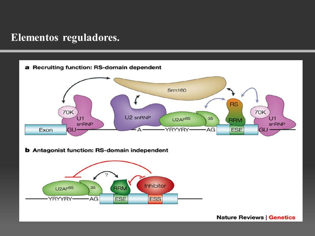 Elementos reguladores.