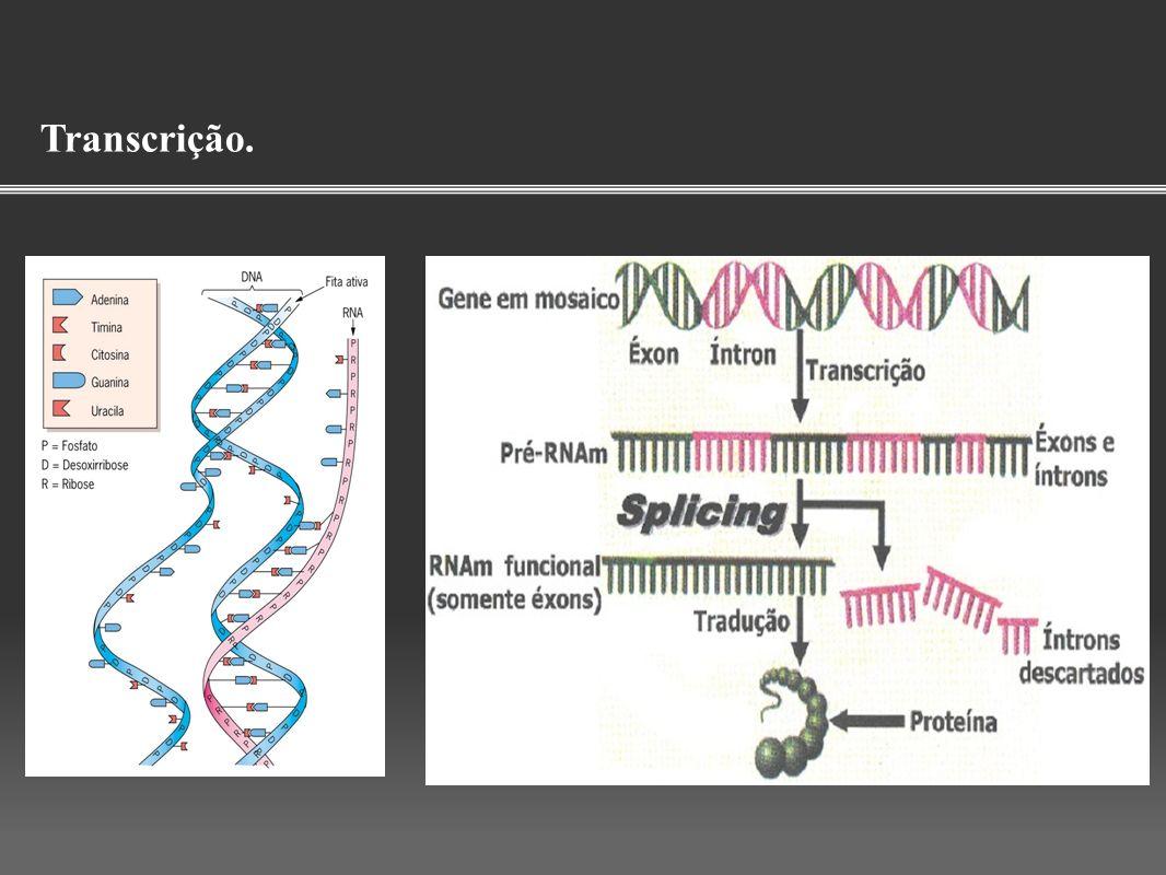 Splicing alternativo e diversidade genética Para esse estudo oito conjuntos de elementos reguladores (seis ESEs e dois ESSs) foram obtidos.