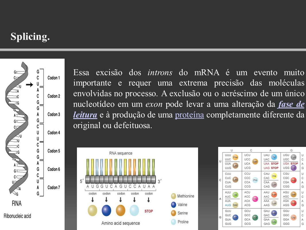 Splicing. Essa excisão dos introns do mRNA é um evento muito importante e requer uma extrema precisão das moléculas envolvidas no processo. A exclusão