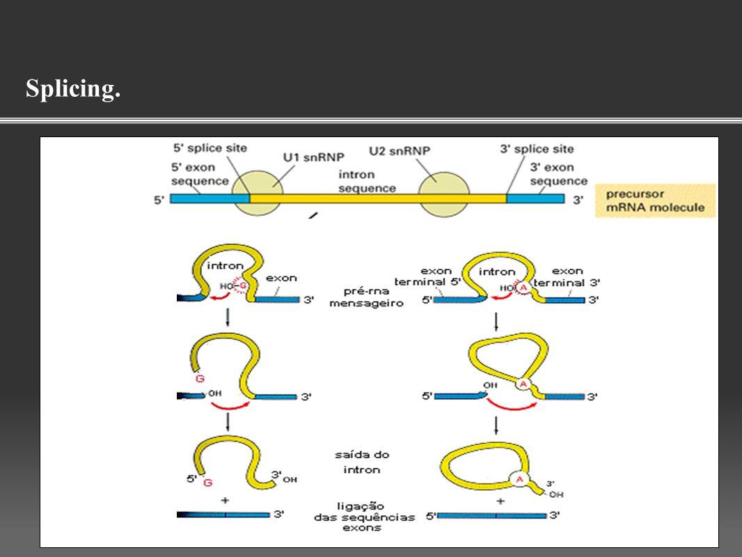 Gene - um segmento de DNA ou RNA que carrega a informação genética.