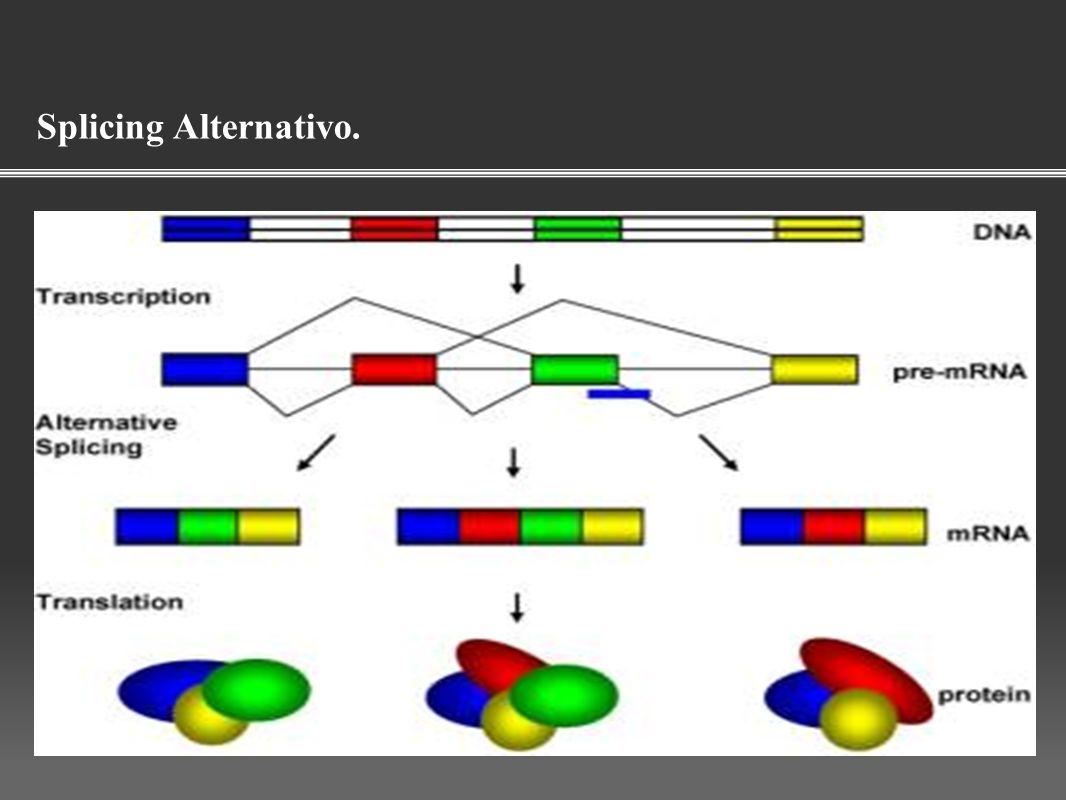 O processo pelo qual os exons de um pré-mRNA se ligam de maneiras diferentes durante o splicing de RNA.