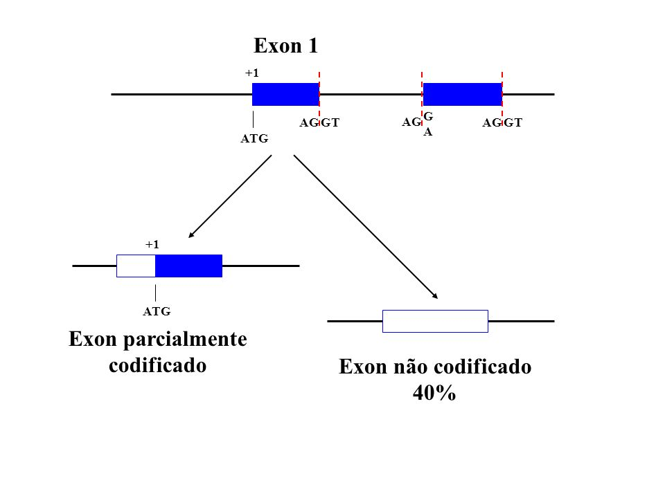 O programa foi rodado com a seqüência completa do Chr 21 e Chr 22. Eficiência do FirstEF