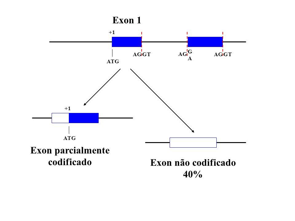 ATG AGGTAGGT AG GAGA +1 Exon 1 +1 ATG Exon parcialmente codificado Exon não codificado 40%