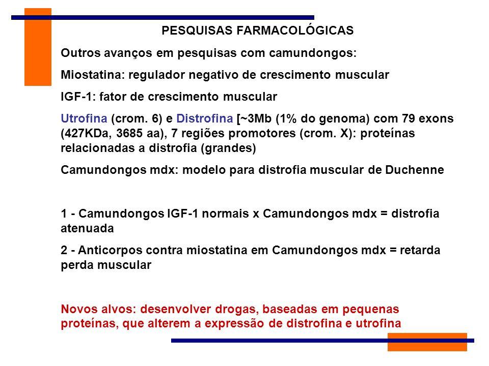 PESQUISAS FARMACOLÓGICAS Outros avanços em pesquisas com camundongos: Miostatina: regulador negativo de crescimento muscular IGF-1: fator de crescimen