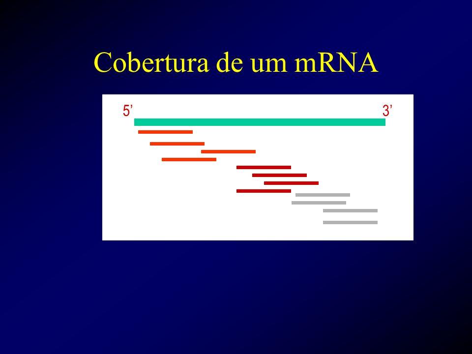 Cobertura de um mRNA 53
