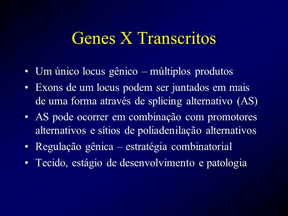 Genes X Transcritos Um único locus gênico – múltiplos produtos Exons de um locus podem ser juntados em mais de uma forma através de splicing alternati