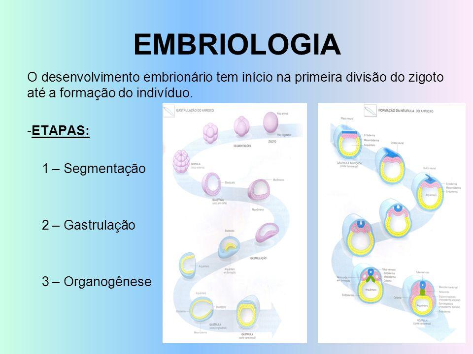 EMBRIOLOGIA O desenvolvimento embrionário tem início na primeira divisão do zigoto até a formação do indivíduo. -ETAPAS: 1 – Segmentação 2 – Gastrulaç