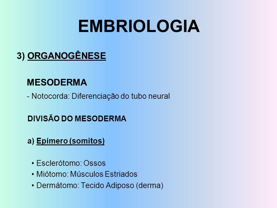 EMBRIOLOGIA 3) ORGANOGÊNESE MESODERMA - Notocorda: Diferenciação do tubo neural DIVISÃO DO MESODERMA a) Epímero (somitos) Esclerótomo: Ossos Miótomo: Músculos Estriados Dermátomo: Tecido Adiposo (derma)
