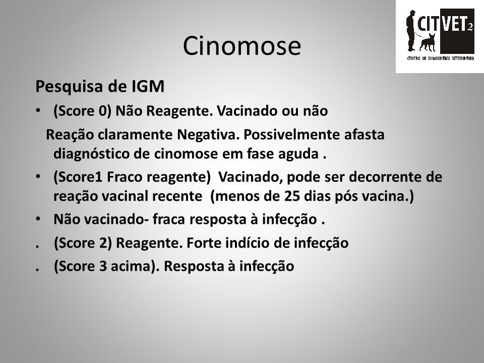 Cinomose Pesquisa de IGG. Sens. 93,5% Espec. 95,5% Resultado forte positivo (score 3 ou maior) Presença de resposta imune à vacinação ou desafio viral