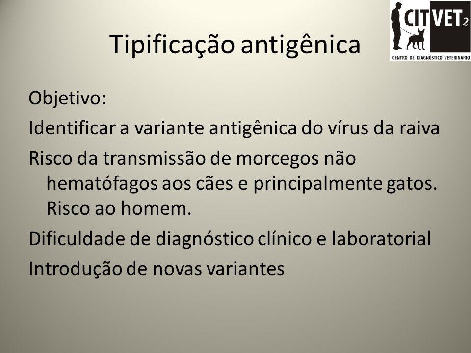 Eliminação do vírus RAIVA EM ANIMAIS DOMÉSTICOS DE ESTIMAÇÃO É frequente o isolamento de vírus da raiva em glândulas salivares de animais doentes, dif