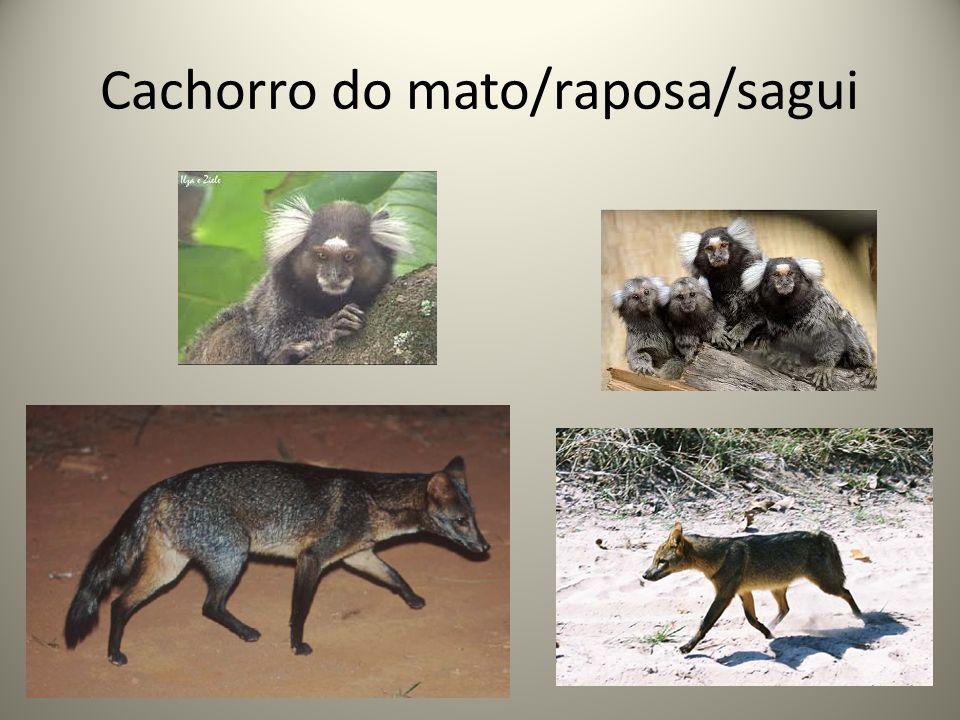 Novas perspectivas sobre o vírus rábico Variantes antigênicas Variante 2 (Cão) Variante 3 (Desmodus) Variante 4 (Tadarida) Variante 6 (Lasiurus) Variante de raposas e saguis Determinação por Ac.