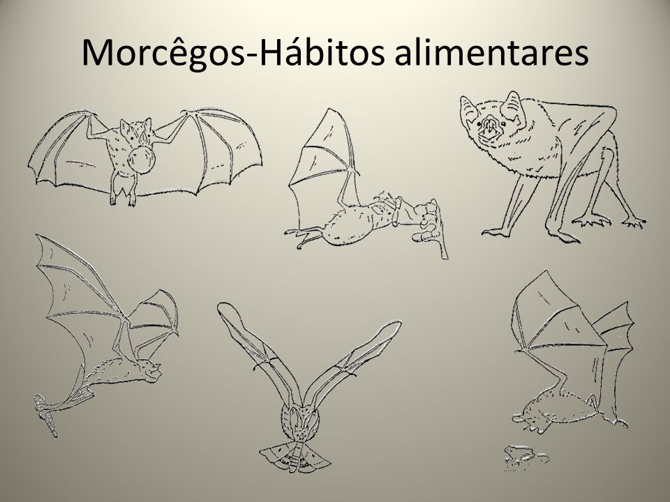 Os morcegos e a raiva Importância ecológica 1- Controle de insetos e pragas 2- Controle da população de pequenos vertebrados 3- Controle populacional de espécies silvestres 4- Formação e expansão de florestas, através da dispersão de sementes