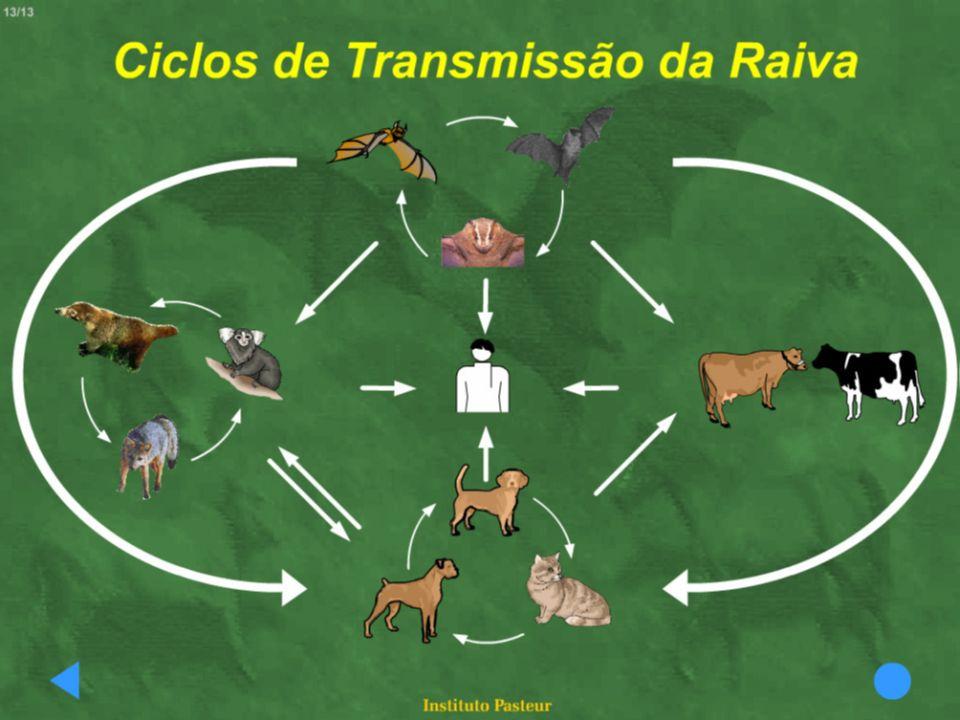 Diagnóstico diferencial Raiva ou cinomose.