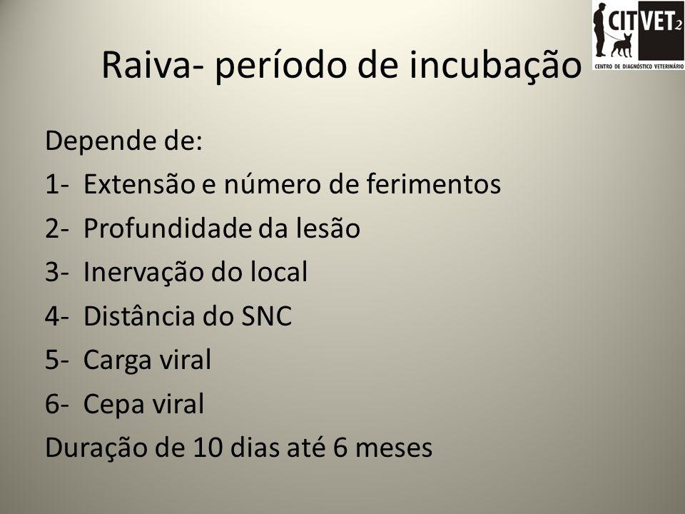 Raiva- período de incubação Depende de: 1- Extensão e número de ferimentos 2- Profundidade da lesão 3- Inervação do local 4- Distância do SNC 5- Carga viral 6- Cepa viral Duração de 10 dias até 6 meses