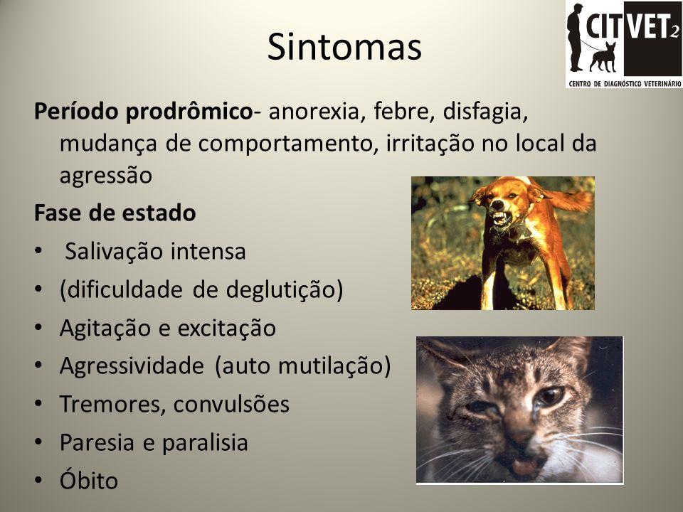 Hematófago-Diphyla ecaudata/ Desmodus rotundus