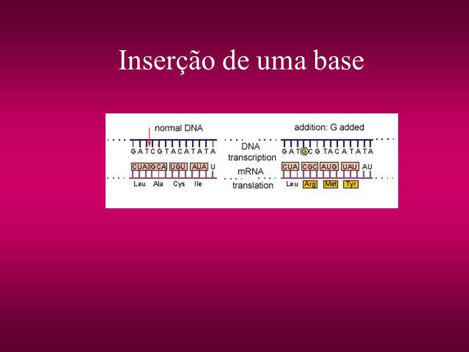 Inserção de uma base