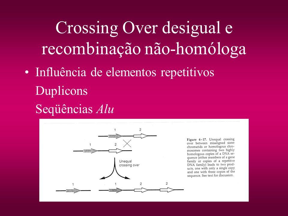 Crossing Over desigual e recombinação não-homóloga Influência de elementos repetitivos Duplicons Seqüências Alu