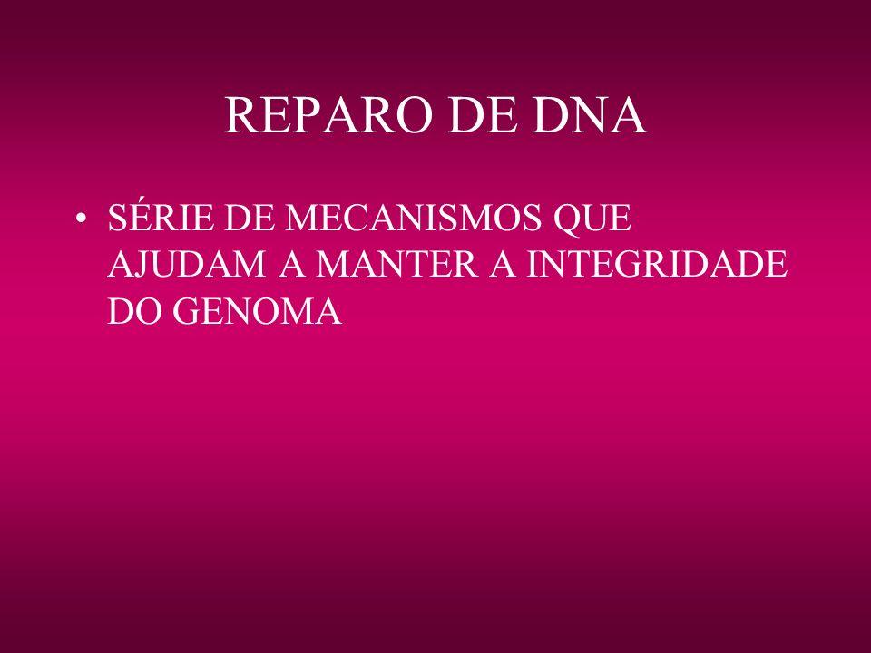 REPARO DE DNA SÉRIE DE MECANISMOS QUE AJUDAM A MANTER A INTEGRIDADE DO GENOMA