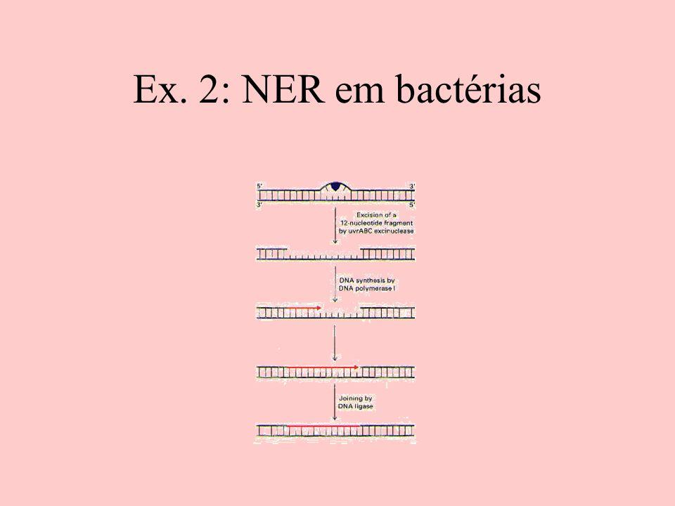 Ex. 2: NER em bactérias
