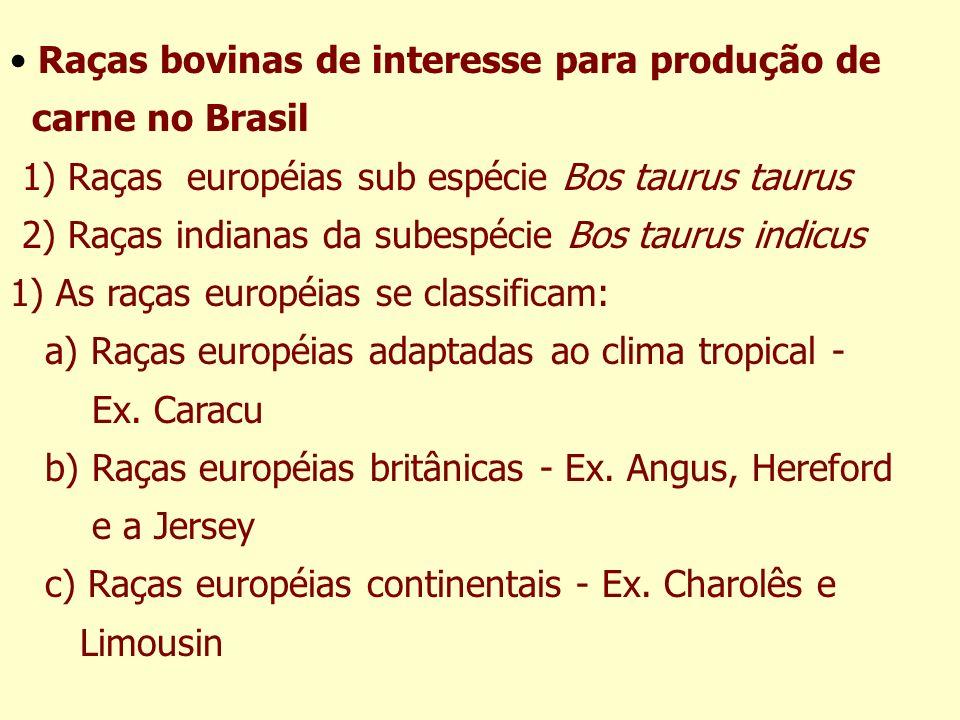 Raças bovinas de interesse para produção de carne no Brasil 1) Raças européias sub espécie Bos taurus taurus 2) Raças indianas da subespécie Bos tauru