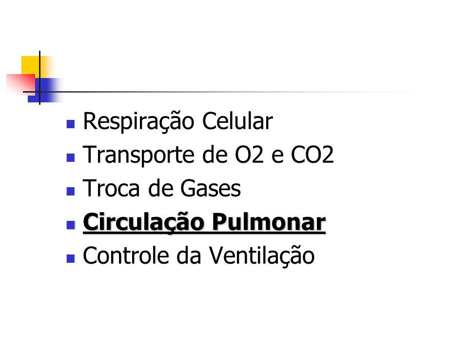 Respiração Celular Transporte de O2 e CO2 Troca de Gases Circulação Pulmonar Circulação Pulmonar Controle da Ventilação