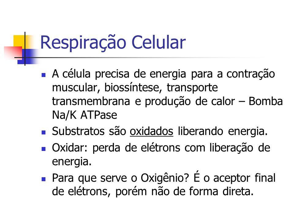 Respiração Celular A célula precisa de energia para a contração muscular, biossíntese, transporte transmembrana e produção de calor – Bomba Na/K ATPase Substratos são oxidados liberando energia.