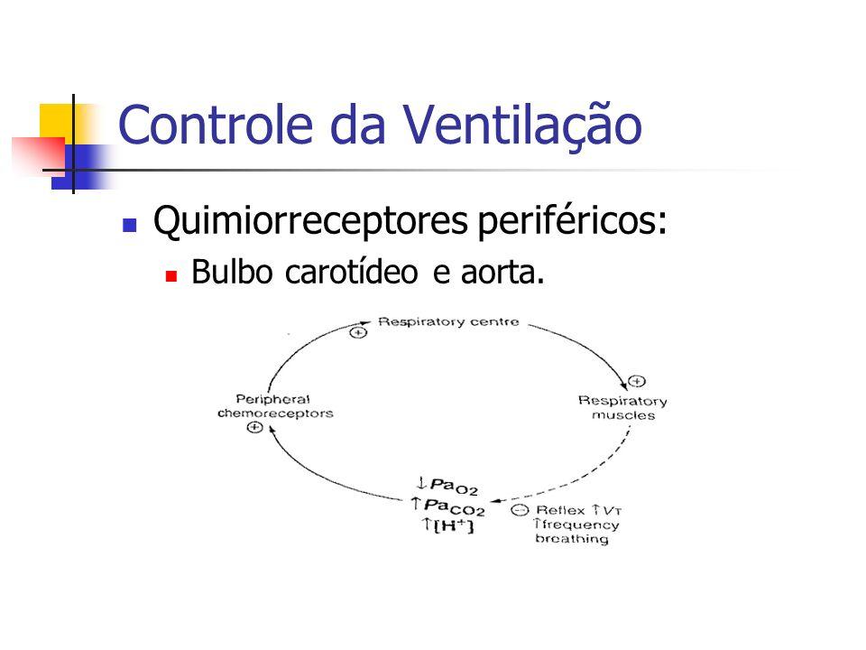 Controle da Ventilação Quimiorreceptores periféricos: Bulbo carotídeo e aorta.