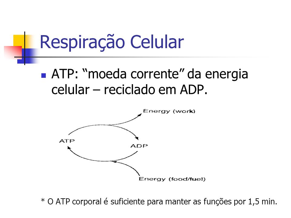 ATP: moeda corrente da energia celular – reciclado em ADP.