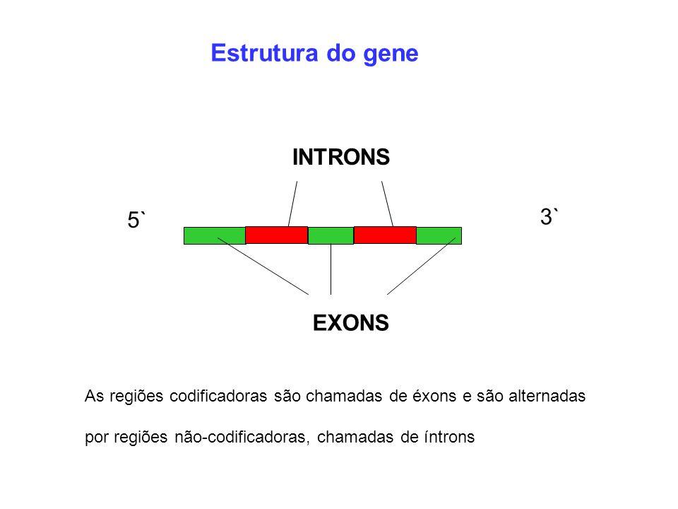 Estrutura do gene 5` 3` EXONS INTRONS As regiões codificadoras são chamadas de éxons e são alternadas por regiões não-codificadoras, chamadas de íntro