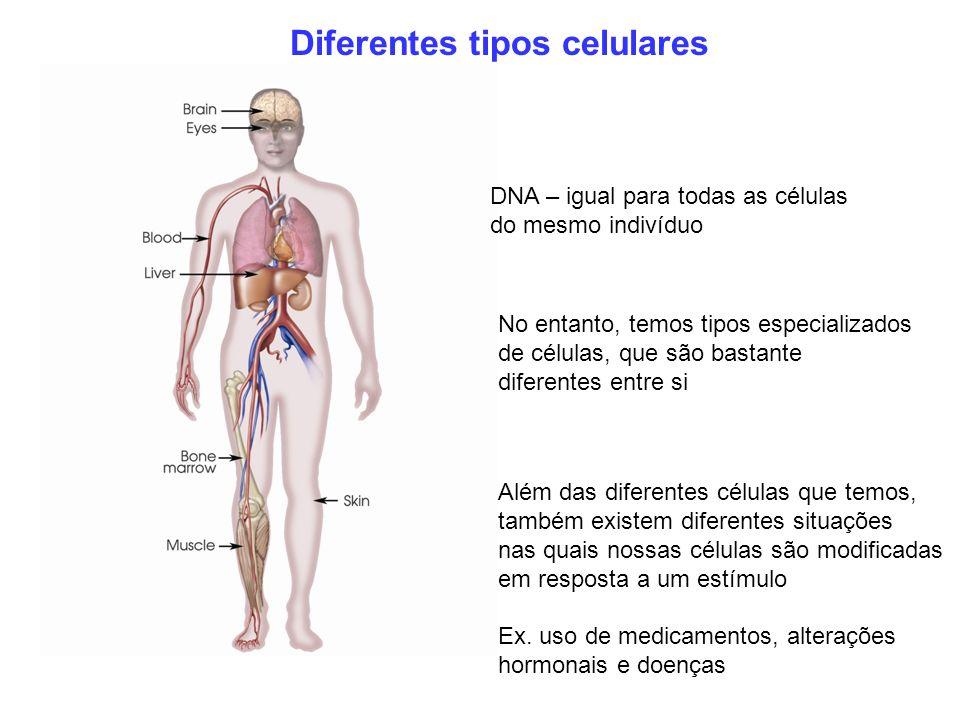 DNA – igual para todas as células do mesmo indivíduo No entanto, temos tipos especializados de células, que são bastante diferentes entre si Além das