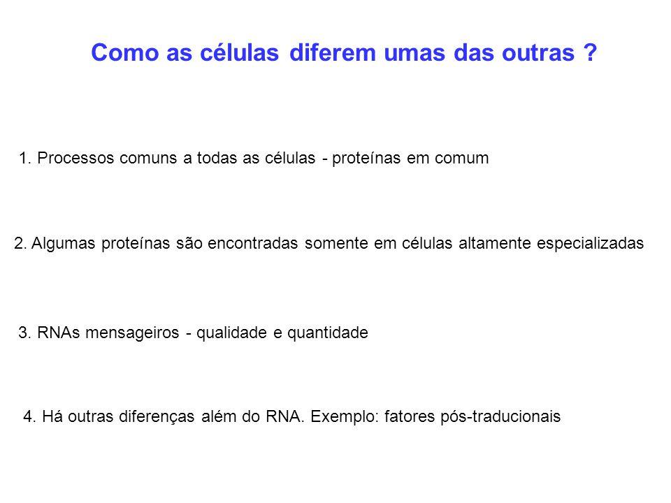 1. Processos comuns a todas as células - proteínas em comum Como as células diferem umas das outras ? 2. Algumas proteínas são encontradas somente em