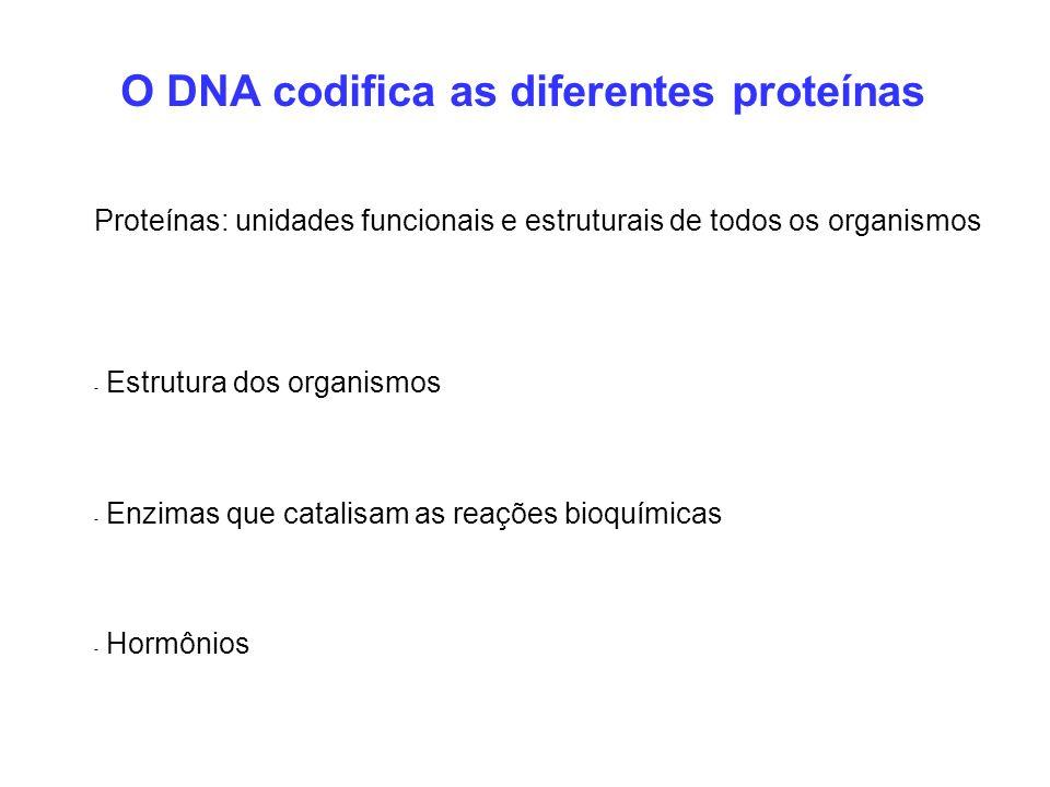 Proteínas: unidades funcionais e estruturais de todos os organismos - Estrutura dos organismos - Enzimas que catalisam as reações bioquímicas - Hormôn