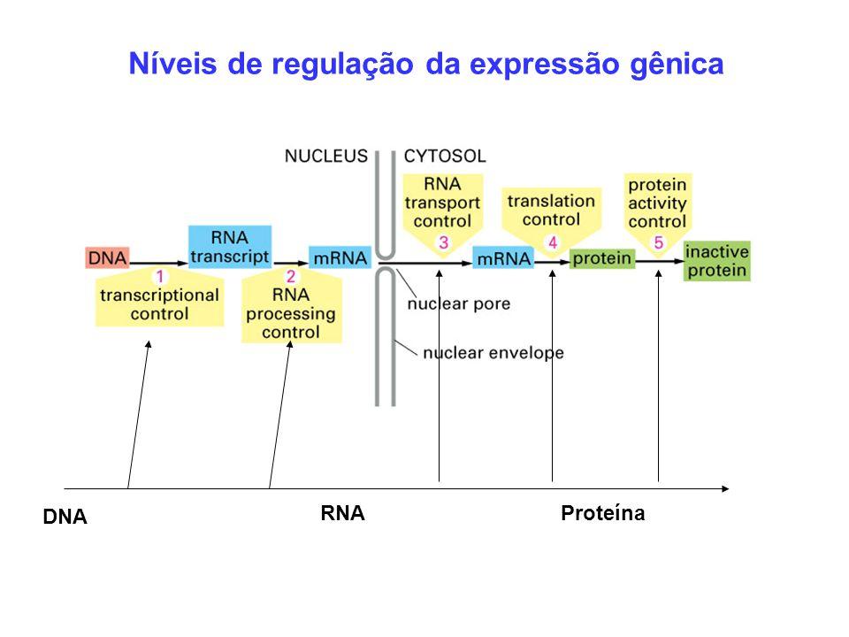DNA RNAProteína Níveis de regulação da expressão gênica