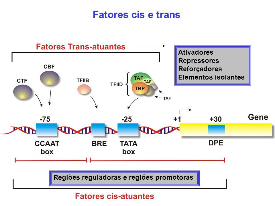 Ativadores Repressores Reforçadores Elementos isolantes Regiões reguladoras e regiões promotoras Fatores cis e trans