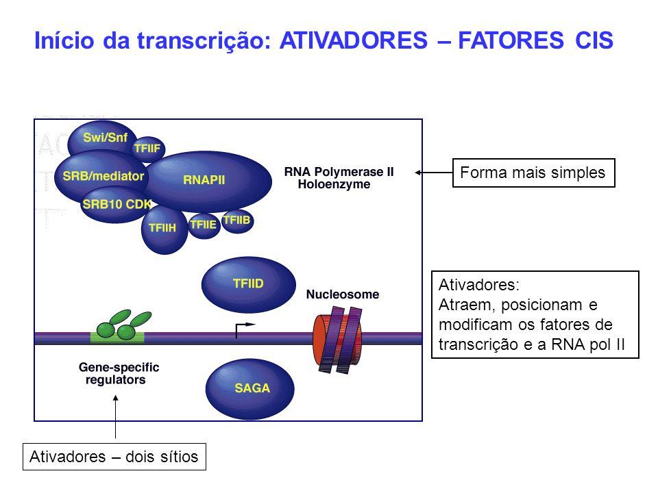Início da transcrição: ATIVADORES – FATORES CIS Ativadores – dois sítios Forma mais simples Ativadores: Atraem, posicionam e modificam os fatores de t