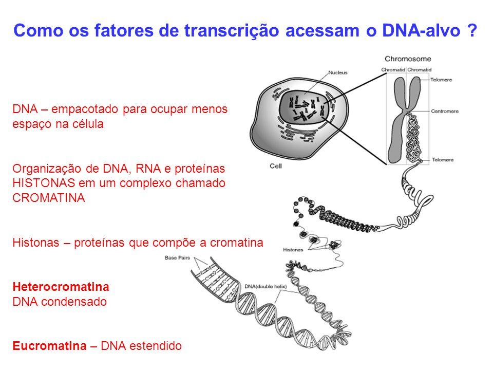 Como os fatores de transcrição acessam o DNA-alvo ? DNA – empacotado para ocupar menos espaço na célula Organização de DNA, RNA e proteínas HISTONAS e