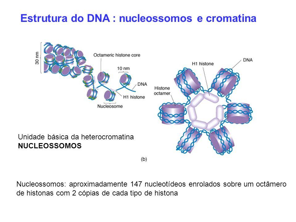 Estrutura do DNA : nucleossomos e cromatina Nucleossomos: aproximadamente 147 nucleotídeos enrolados sobre um octâmero de histonas com 2 cópias de cad