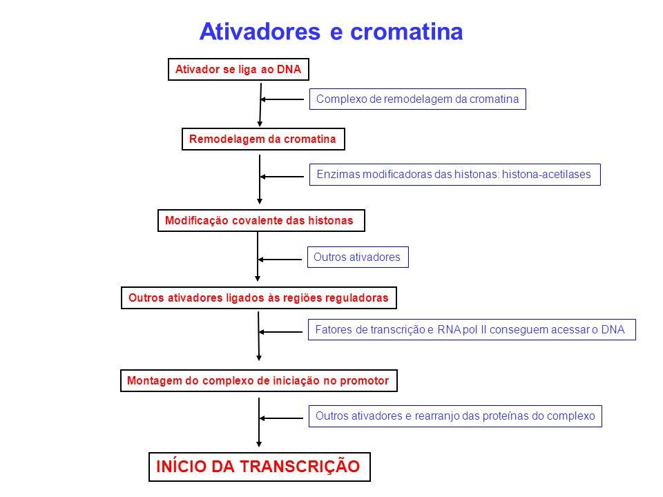 Ativadores e cromatina Ativador se liga ao DNA Complexo de remodelagem da cromatina Remodelagem da cromatina Enzimas modificadoras das histonas: histo