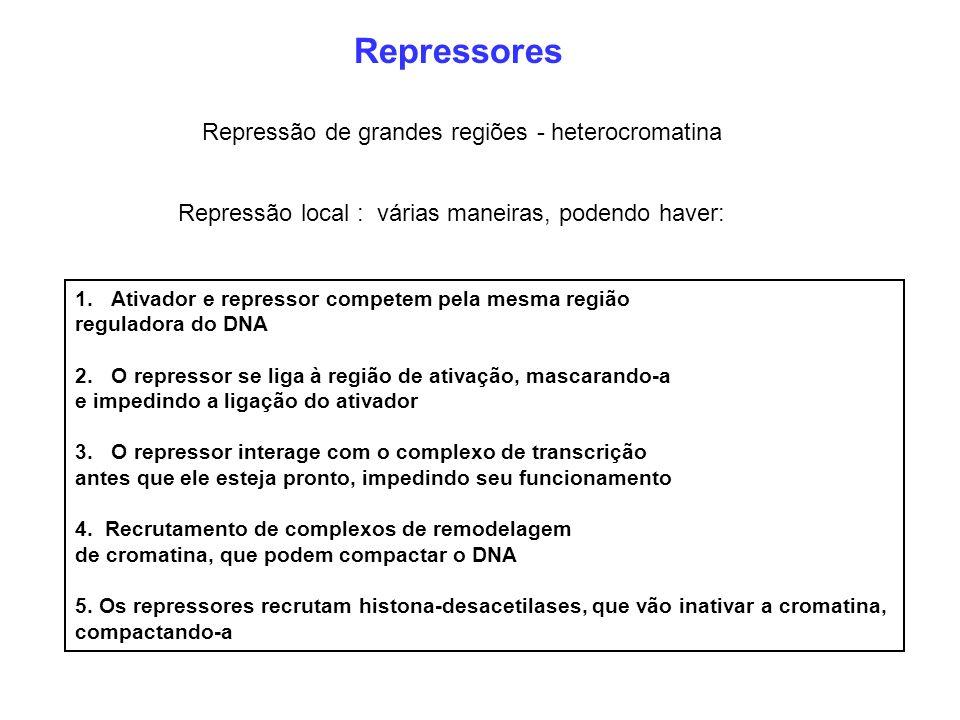 Repressores Repressão de grandes regiões - heterocromatina Repressão local : várias maneiras, podendo haver: 1.Ativador e repressor competem pela mesm
