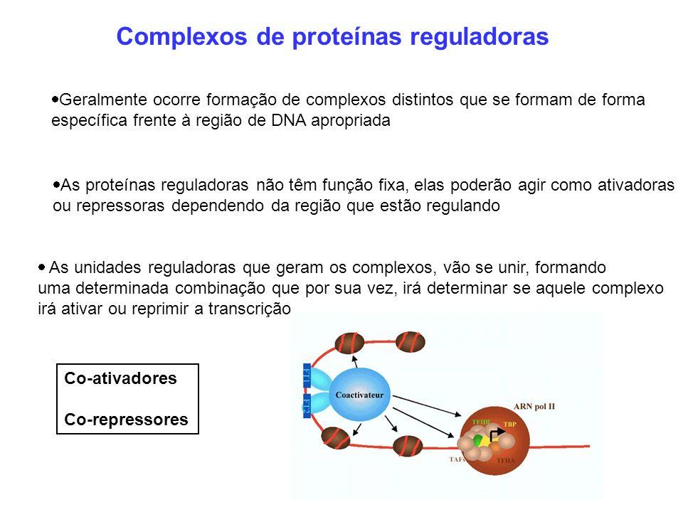 Complexos de proteínas reguladoras Geralmente ocorre formação de complexos distintos que se formam de forma específica frente à região de DNA apropria