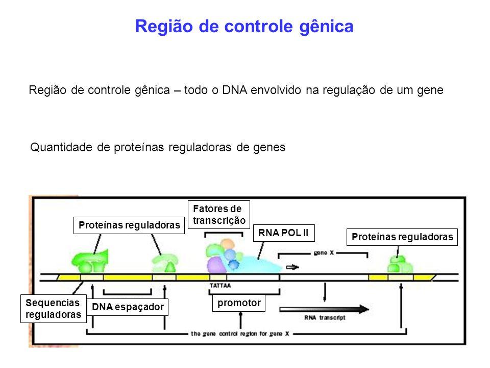 Região de controle gênica Região de controle gênica – todo o DNA envolvido na regulação de um gene Quantidade de proteínas reguladoras de genes Proteí