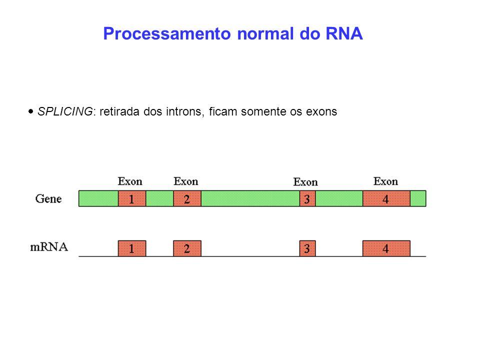 Processamento normal do RNA SPLICING: retirada dos introns, ficam somente os exons