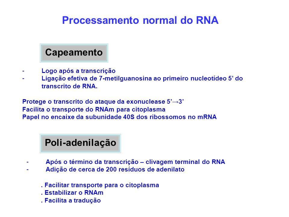 Capeamento -Logo após a transcrição -Ligação efetiva de 7-metilguanosina ao primeiro nucleotídeo 5 do transcrito de RNA. Protege o transcrito do ataqu