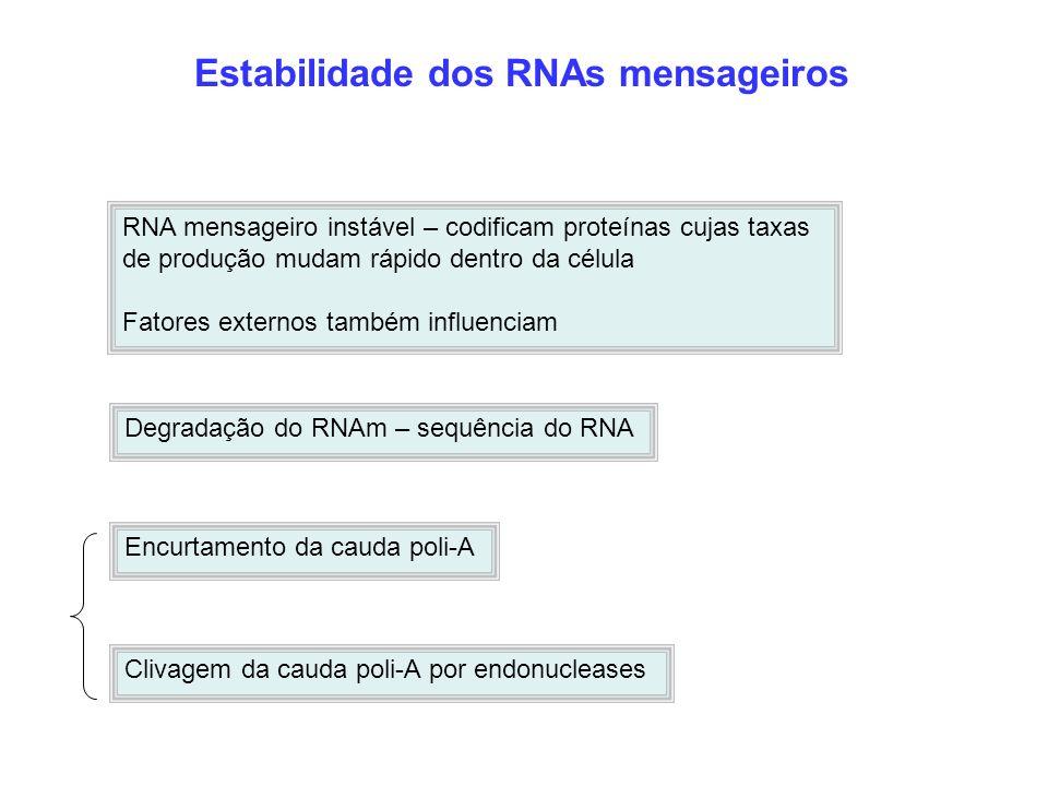 Estabilidade dos RNAs mensageiros RNA mensageiro instável – codificam proteínas cujas taxas de produção mudam rápido dentro da célula Fatores externos