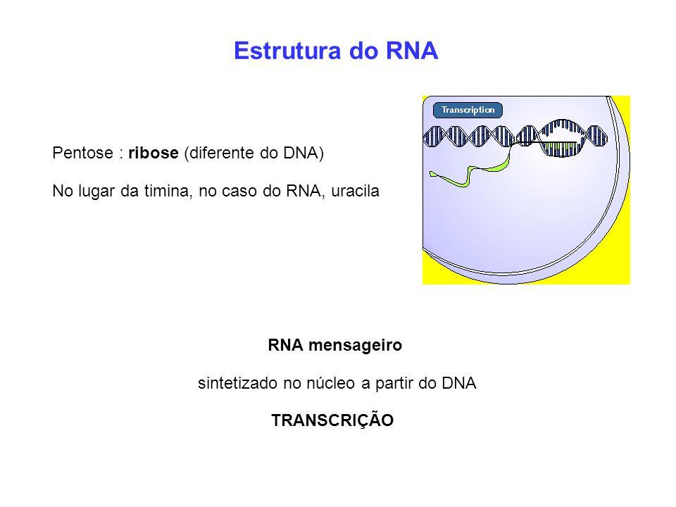 Estrutura do RNA Pentose : ribose (diferente do DNA) No lugar da timina, no caso do RNA, uracila RNA mensageiro sintetizado no núcleo a partir do DNA