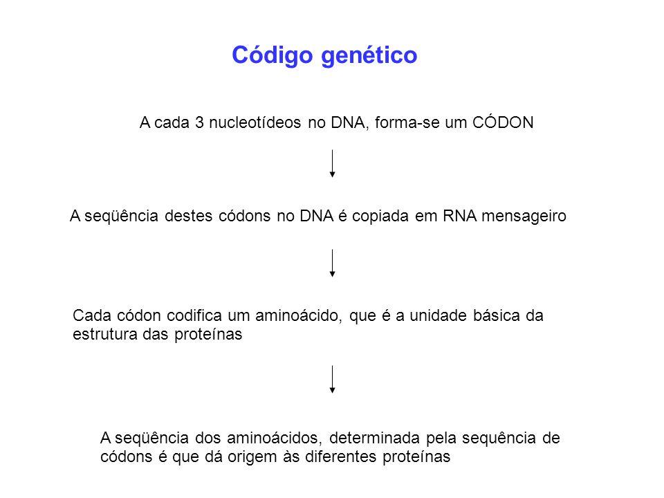 Código genético A cada 3 nucleotídeos no DNA, forma-se um CÓDON Cada códon codifica um aminoácido, que é a unidade básica da estrutura das proteínas A